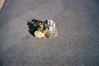 道端にの写真・画像素材[2811470]