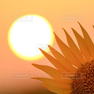 花また明日の写真・画像素材[2859097]