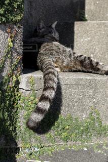 猫,自然,動物,屋外,島,ペット,人物,のんびり,島猫,日向ぼっこ,ネコ