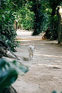 猫,動物,屋外,樹木,ペット,人物,白猫,地面,島猫,ネコ