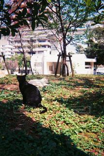 猫,動物,屋外,草,樹木,ペット,人物,フィルム,フィルムカメラ,草木,ネコ,35mm