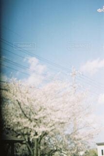 淡く澄んだの写真・画像素材[4345551]