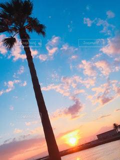 夕日,ビーチ,夕方,景色,ヤシの木,江ノ島,湘南,地元