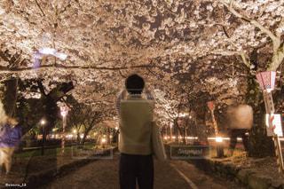 自撮り,桜,ピンク,花見,夜桜,長崎,ソメイヨシノ,大村,大村公園