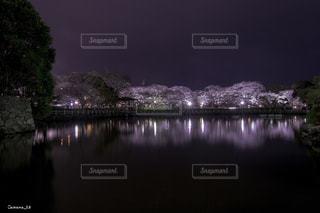 桜,ピンク,池,花見,夜桜,リフレクション,長崎,ソメイヨシノ,大村,大村公園