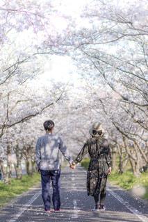 桜並木デートの写真・画像素材[1129474]