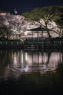 公園,桜,水,夜桜