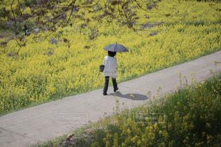 傘を持って通りを歩いている人の写真・画像素材[1129483]