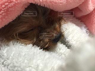 犬の写真・画像素材[472602]
