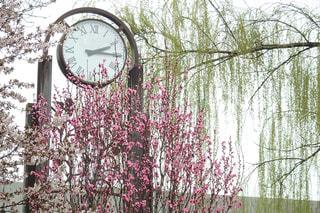 空,花,木,緑,時計