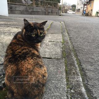 猫,可愛い,cat,長崎,KAWAII,Nagasaki,大村,長崎県大村市,Omura,諏訪駅,諏訪駅近く