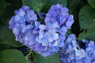 近くの花のアップの写真・画像素材[1246104]