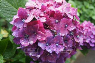 近くの花のアップの写真・画像素材[1246112]