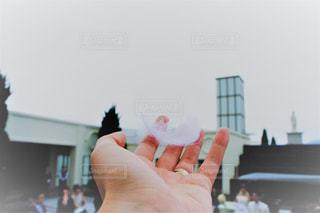 空,鳥,屋外,白,手,結婚式,花嫁,人物,人,ウェディングドレス,幸せ,羽,お祝い,ホワイト,ウェディング,祝福,ライフイベント