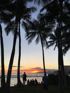 海,空,屋外,太陽,ビーチ,砂浜,夕焼け,水面,光,樹木,ヤシの木,ハワイ,夕陽,草木,パーム