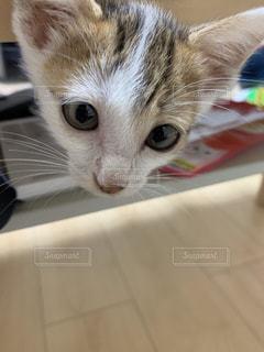 横になってカメラを見ている猫の写真・画像素材[2323548]