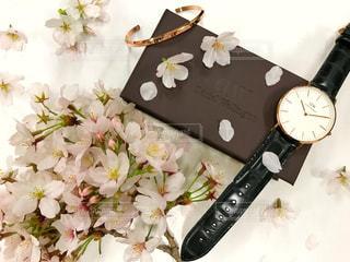 春,桜,腕時計,時計,dw,ダニエルウェリントン