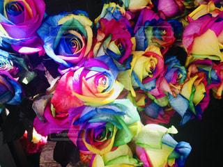色とりどりの花のグループの写真・画像素材[1885091]