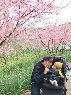 花,桜,お花見,さくら