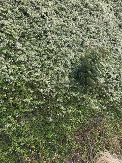 近くの緑の植物を美しいと思うの写真・画像素材[1167577]