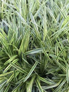 近くの緑の植物をの写真・画像素材[1269814]