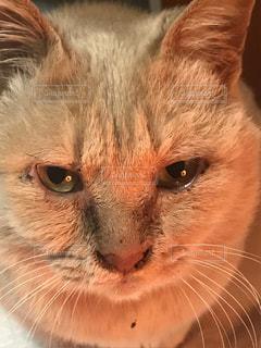 近くに猫のアップの写真・画像素材[1269831]