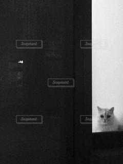 暗い部屋に座っている猫の写真・画像素材[1280248]