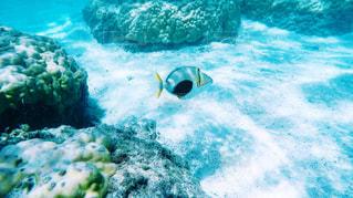 海の写真・画像素材[627704]