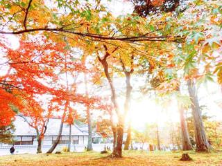 近くの木のアップの写真・画像素材[882307]
