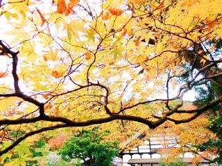 近くの木のアップの写真・画像素材[882311]