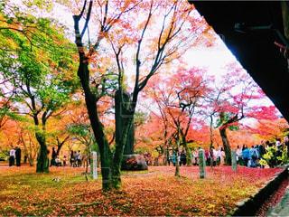 公園の大きな木の写真・画像素材[882316]