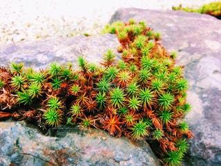庭園の緑の植物 - No.882327