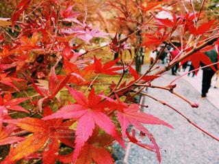 木にピンクの花のグループ - No.882336