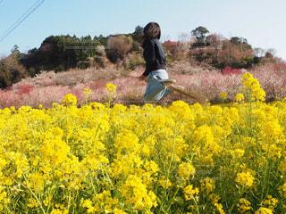 桜 - No.594849