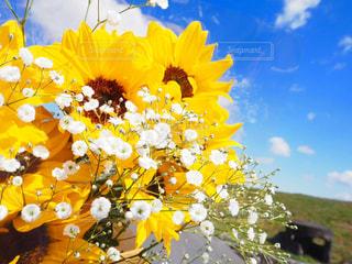 かすみ草の写真・画像素材[594884]