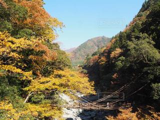 背景の山と木 - No.855725