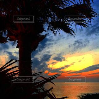 ヤシの木と夕日 - No.870060