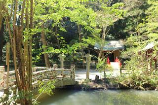自然,春,神社,癒し,パワースポット,静岡県,小國神社,遠州森町