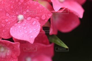 花の写真・画像素材[565910]