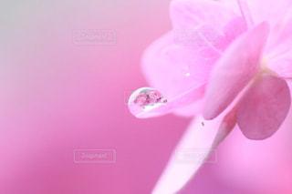 花の写真・画像素材[565912]