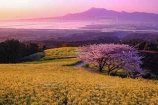 春,絶景,九州,長崎県,白木峰高原