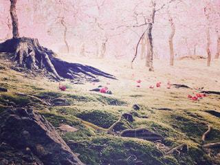 自然,京都,梅,椿,苔,癒し,地元,城南宮,ピンクの空