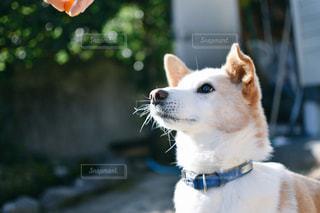 座っている犬の写真・画像素材[974505]