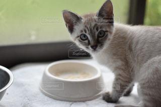 コーヒー カップの横に座っている猫の写真・画像素材[1292427]
