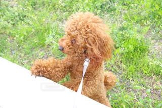 犬 - No.444182