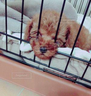 犬 - No.472611