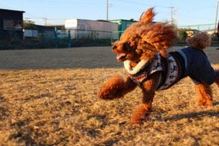 近くにフリスビーで走っている犬のアップ - No.989454
