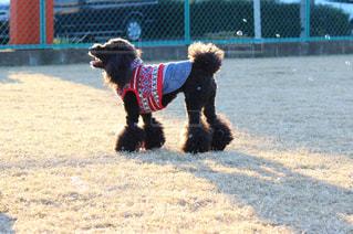 茶色と黒犬がフリスビーで遊んで - No.989455