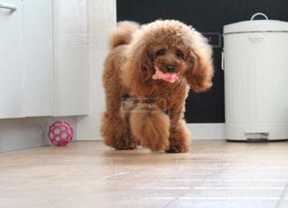 茶色と白犬 - No.989458