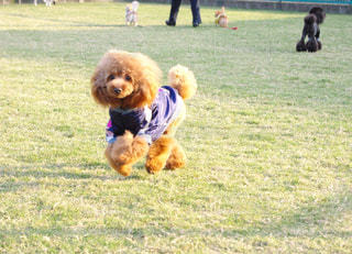 その口でフリスビーで遊ぶ犬 - No.989510